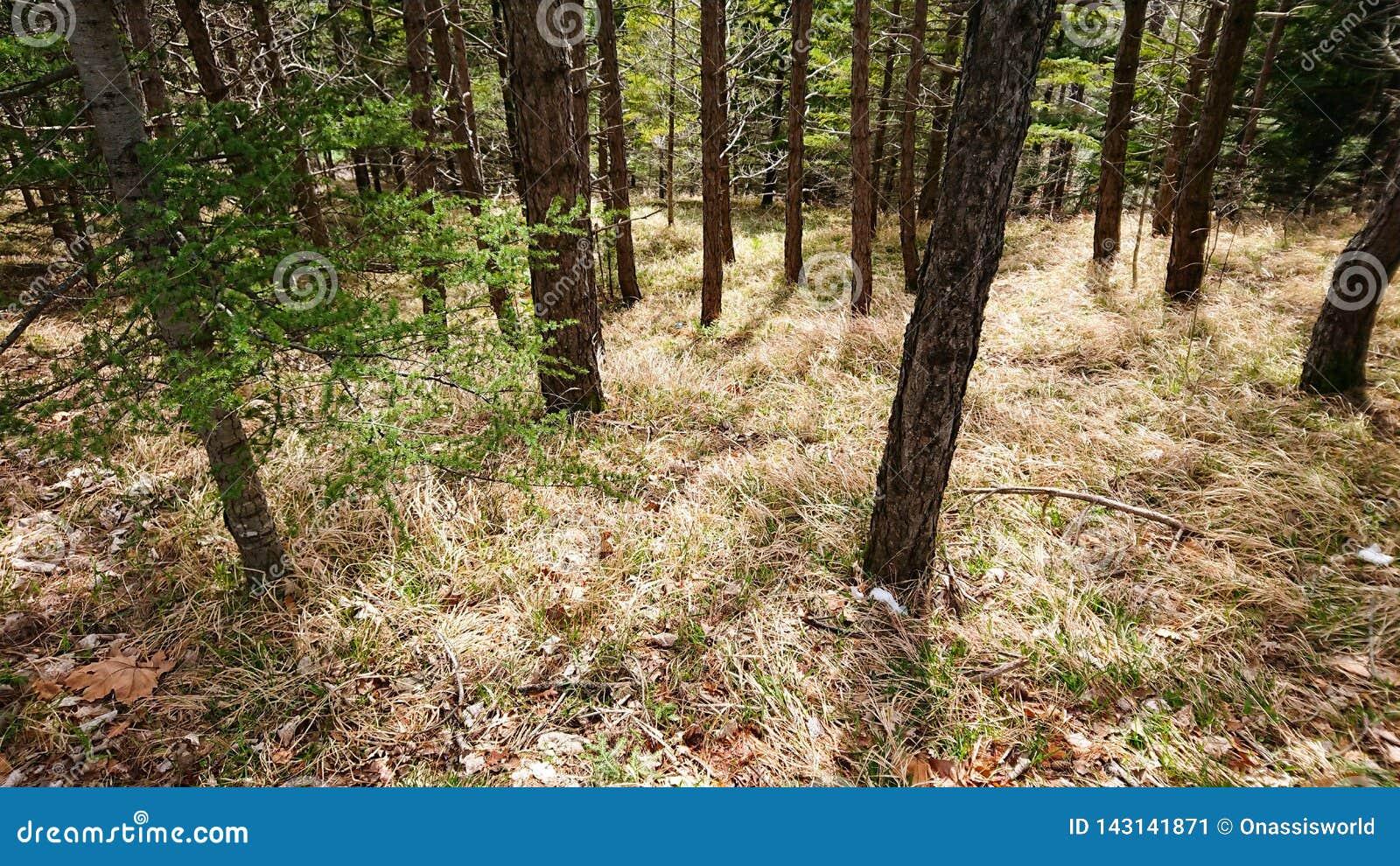 Lasowe łąki