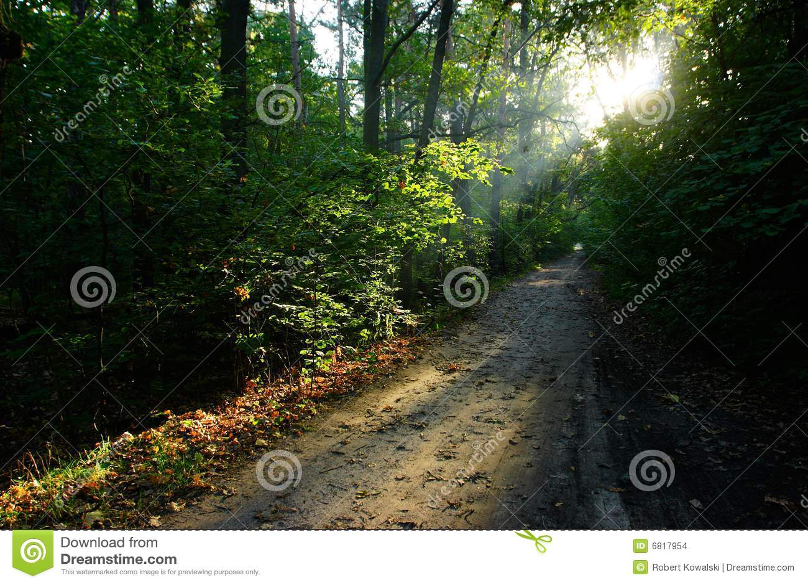 Lasowej ścieżki lato