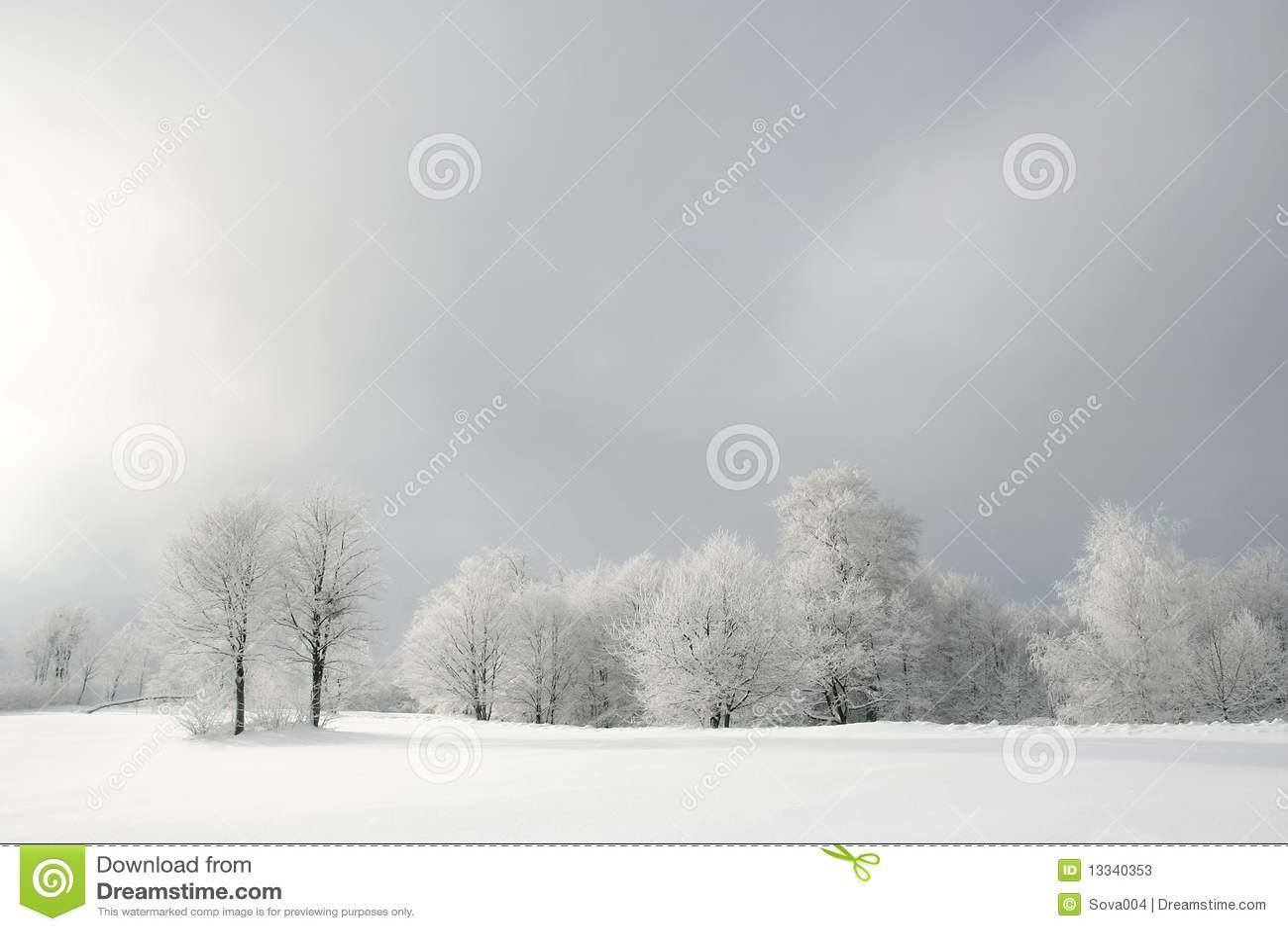 Lasowy biel