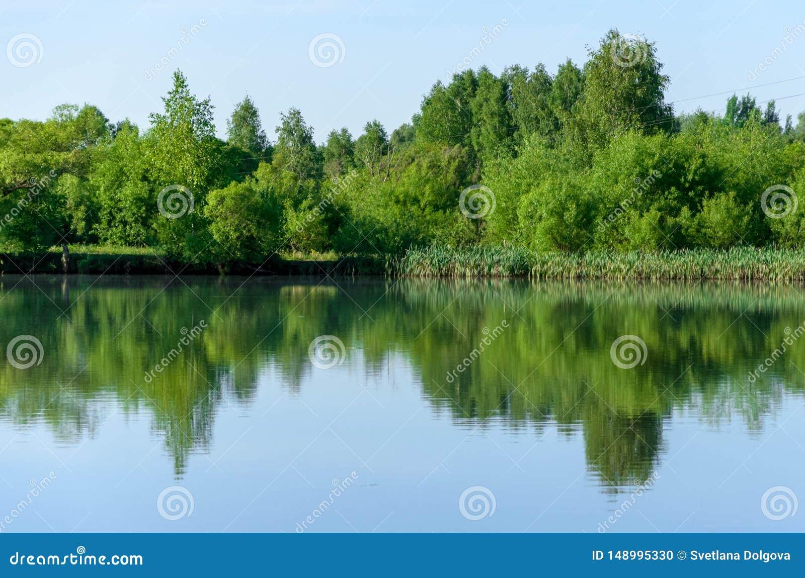 Lasowy jezioro w lato widoku, krajobraz