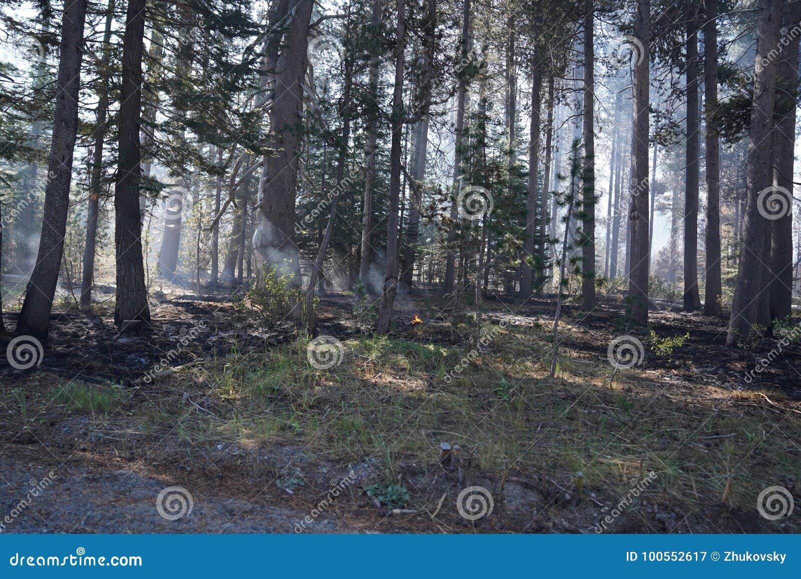 Lasowy pożar