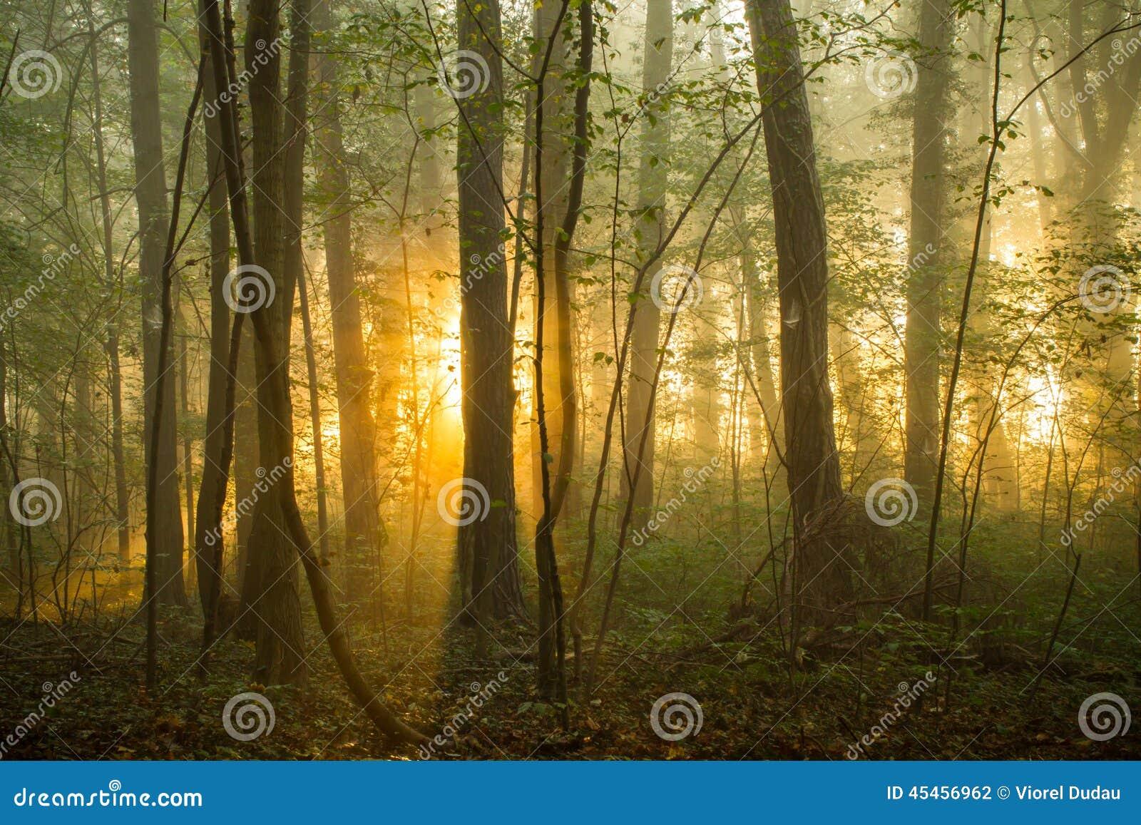 Lasowy ranek