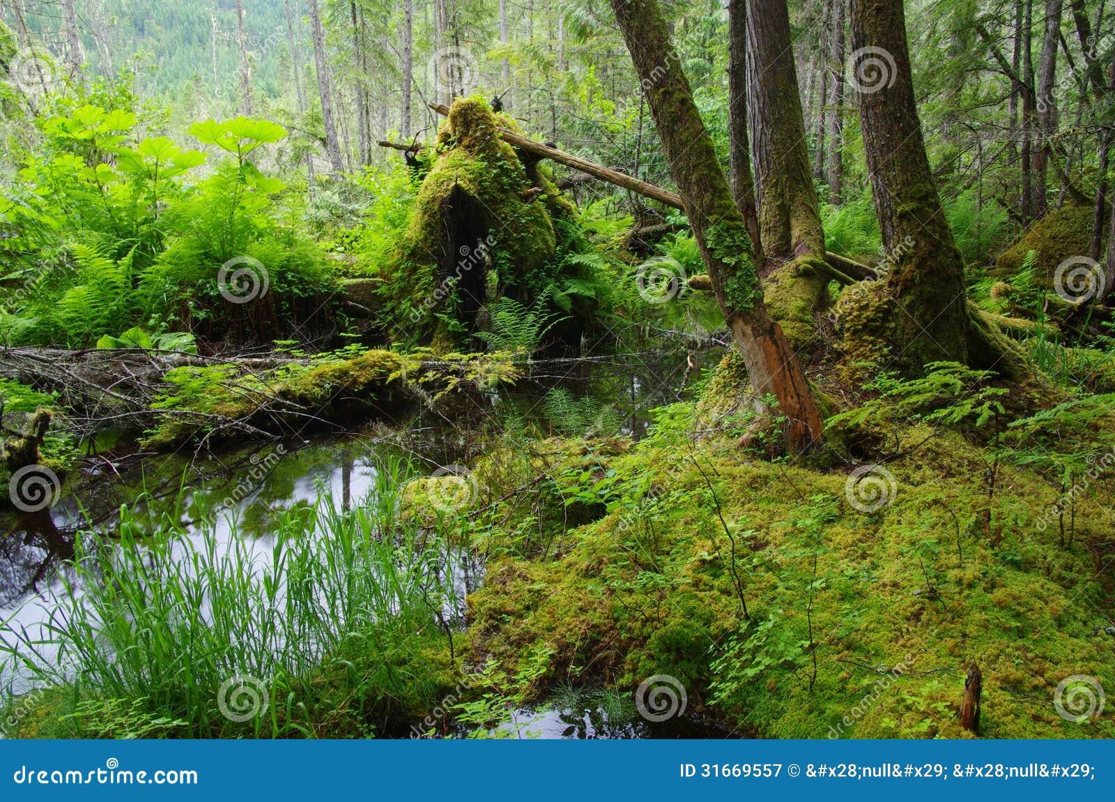 Lasowy staw