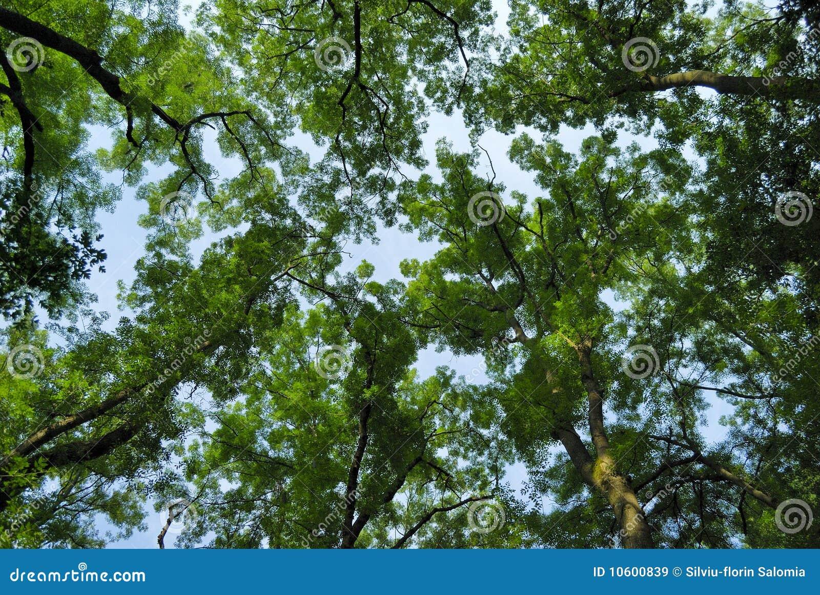 Lasowy tło