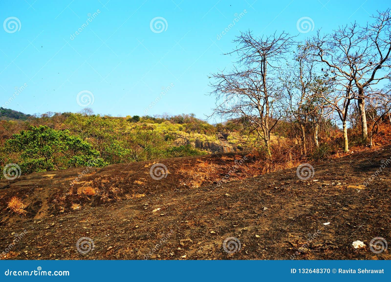 Lasowy teren w Mumbai ind