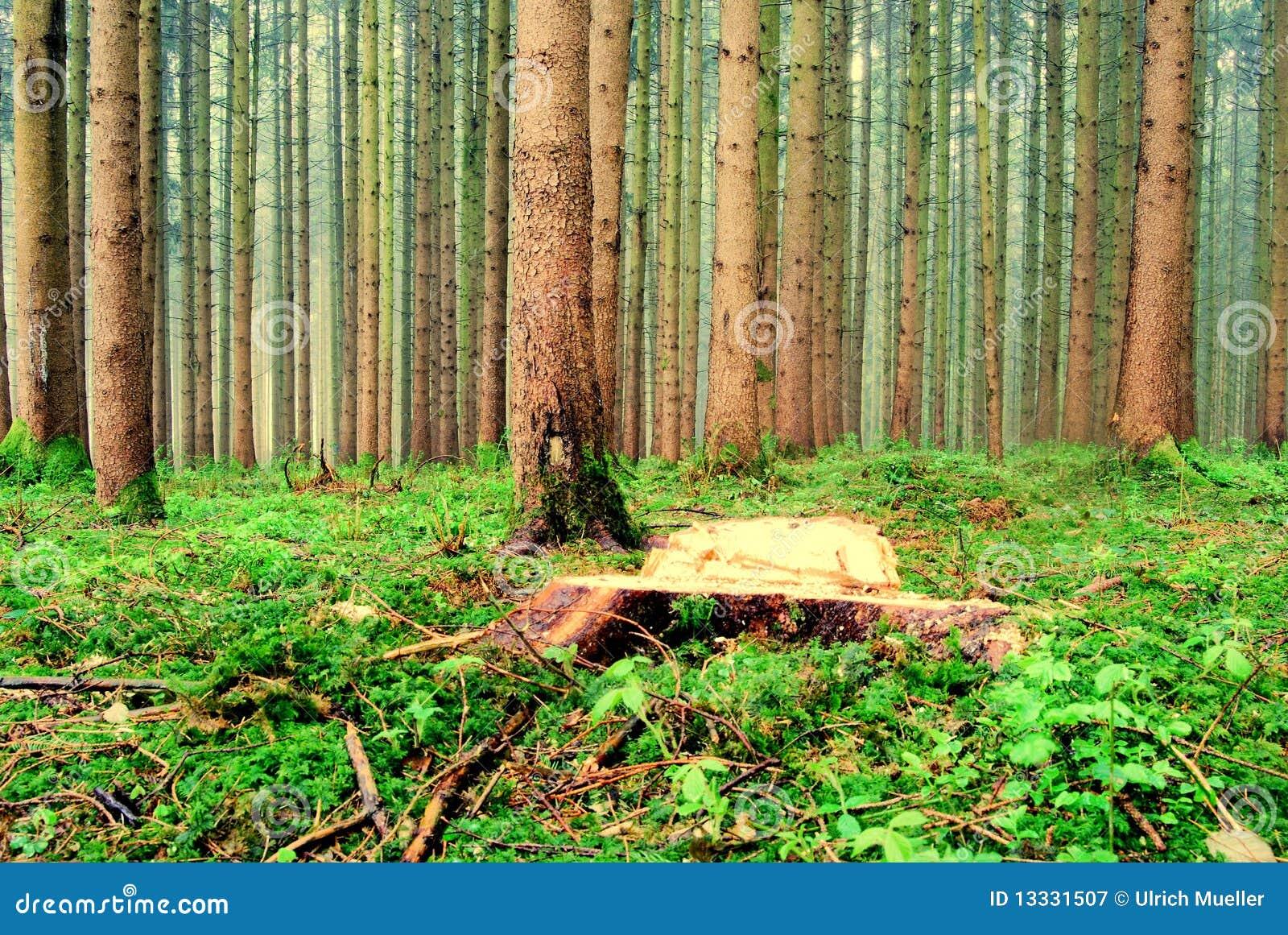 Lasowy widok