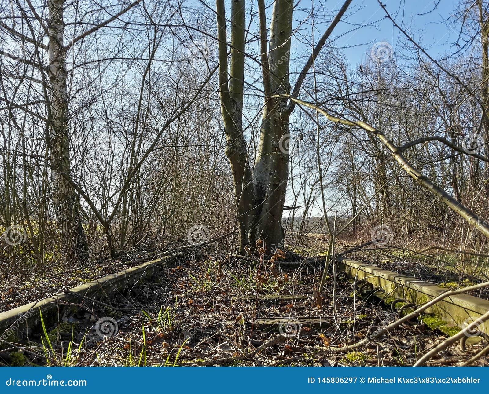 Lassen Sie alte verrostete Bahnlinie mit Anlagen nach innen
