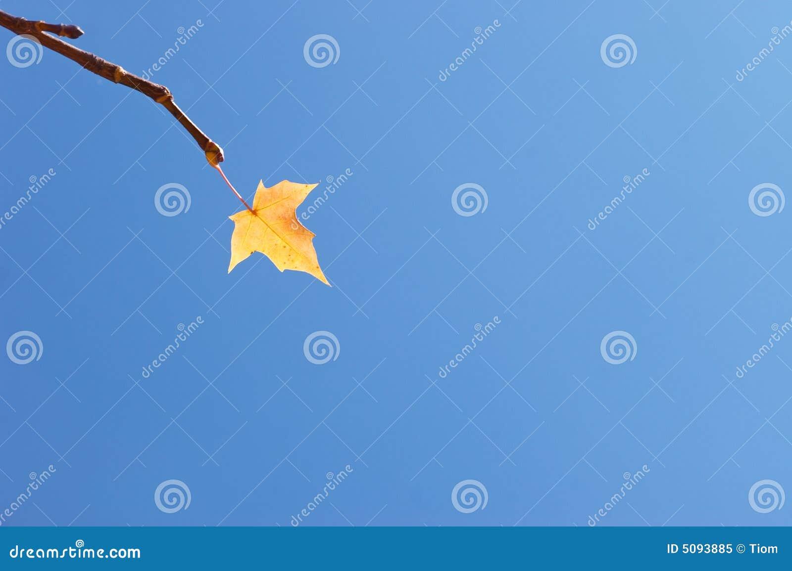 Last autumn leaf