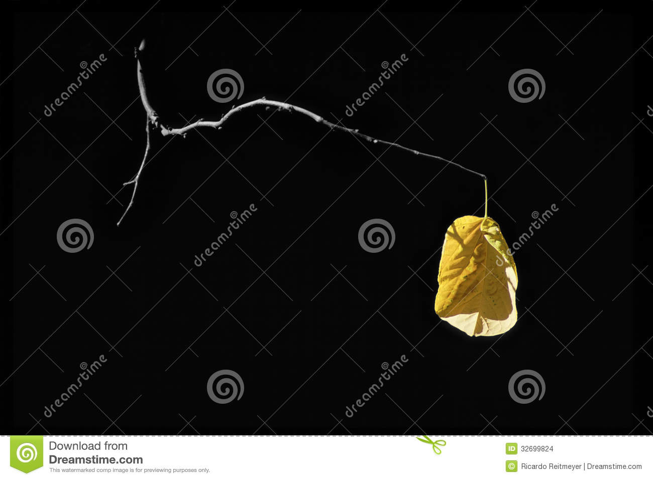 Last Golden Yellow Autumn Leaf Holds on to Life