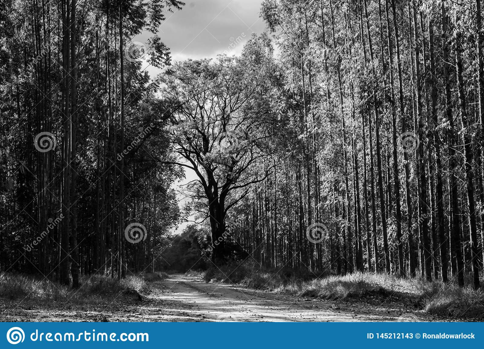 The road to the tree