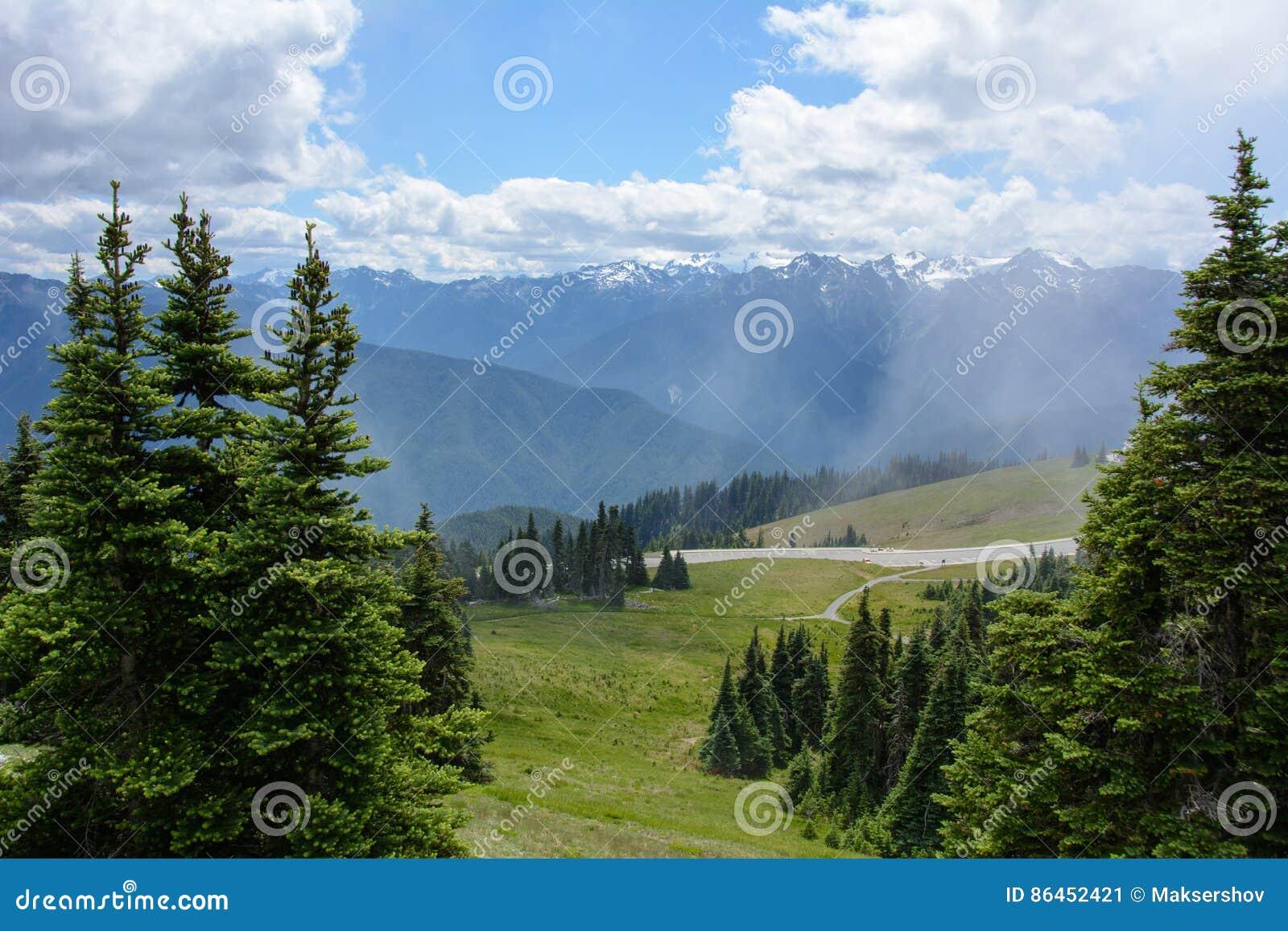 Lasu krajobraz w górach, Olimpijski park narodowy, Waszyngton, usa