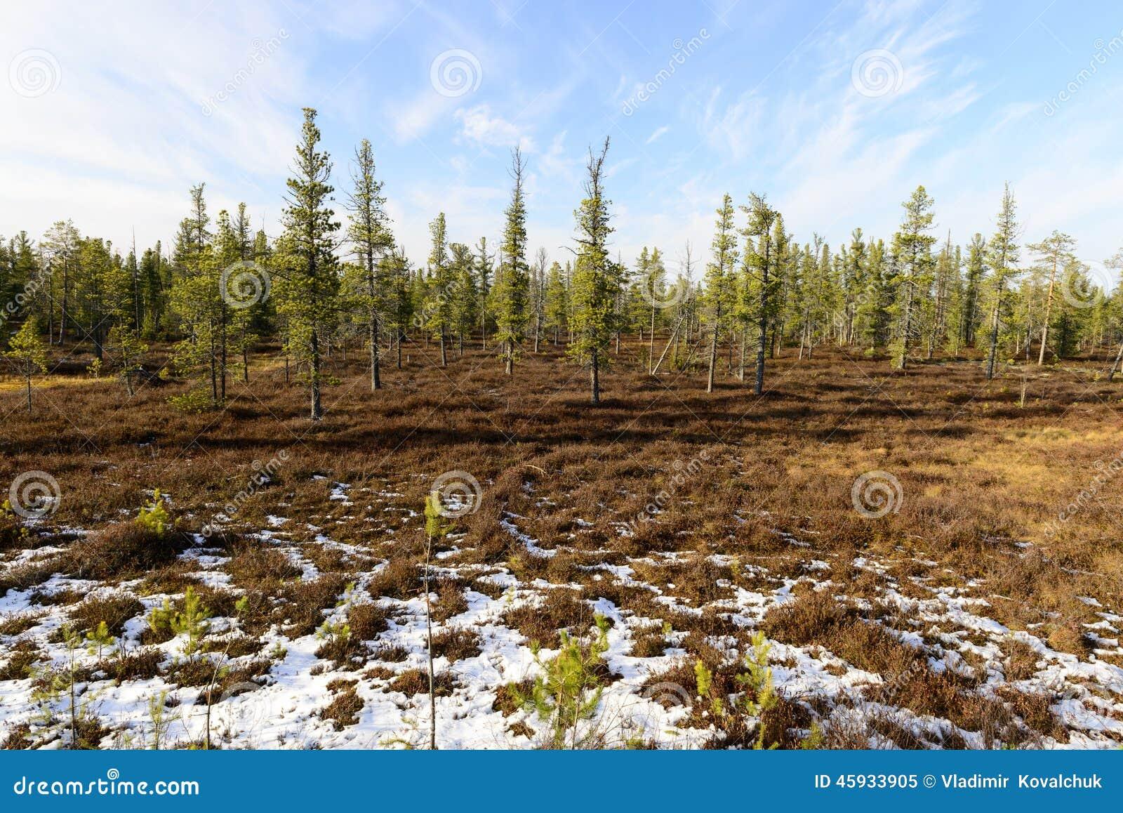 Lasu krajobraz w jesieni w Rosyjskiej tajdze