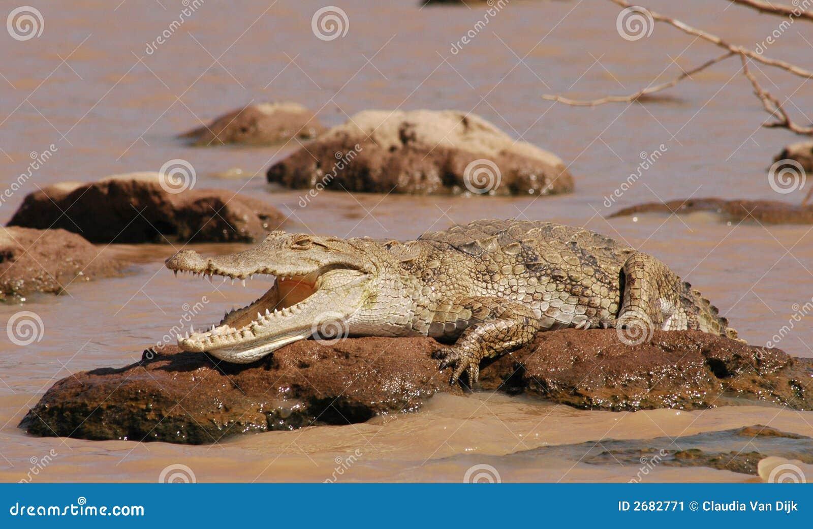 Lat krokodil