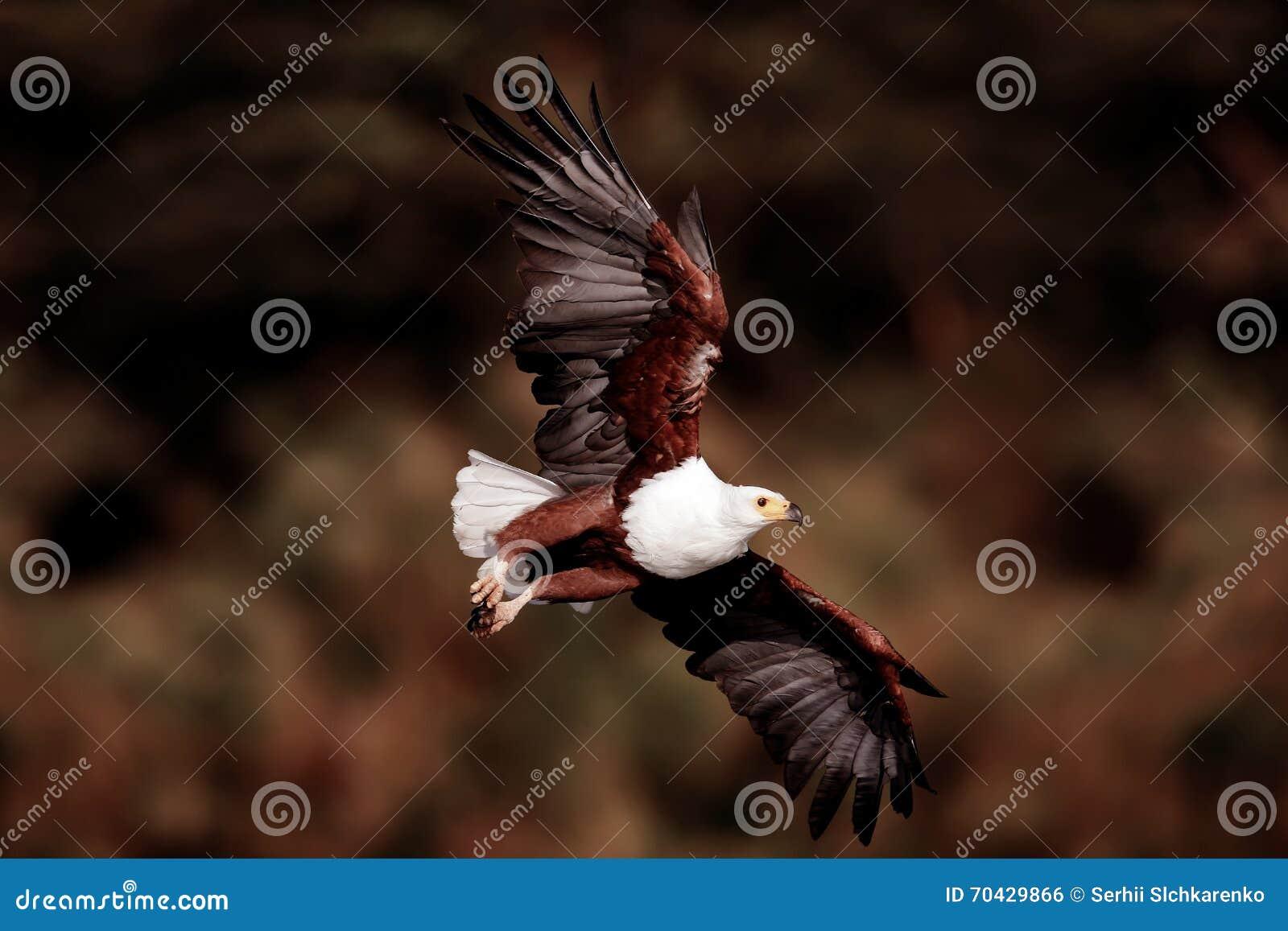 Latać Eagle