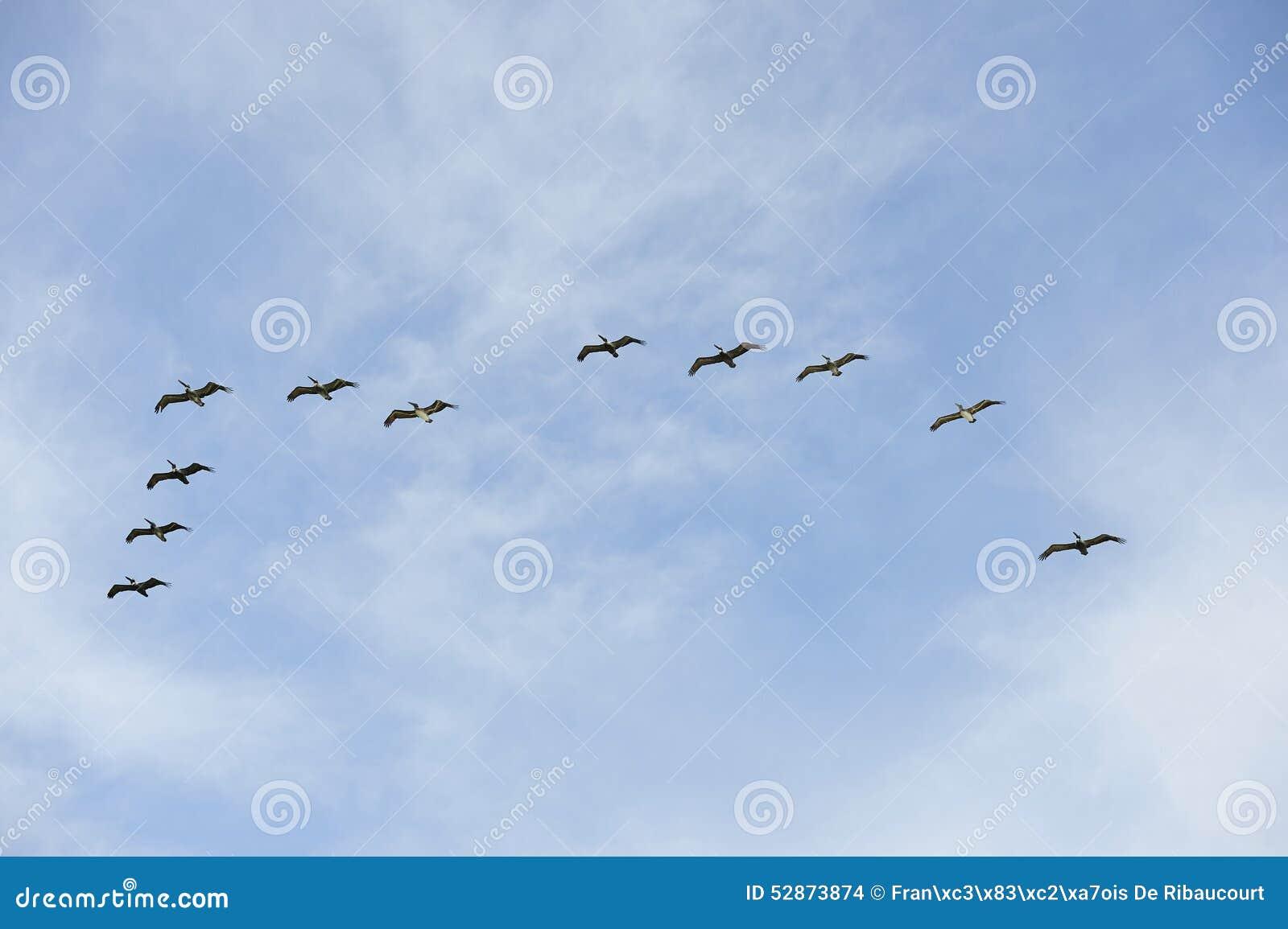 Latać ptaków