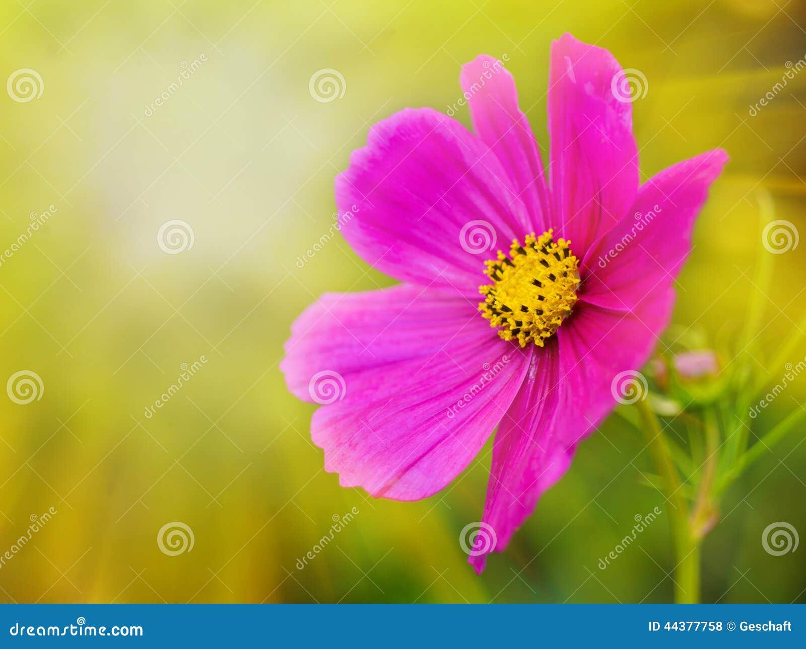 Lata światła słonecznego scena: Piękny kwiat na Zielonej trawie