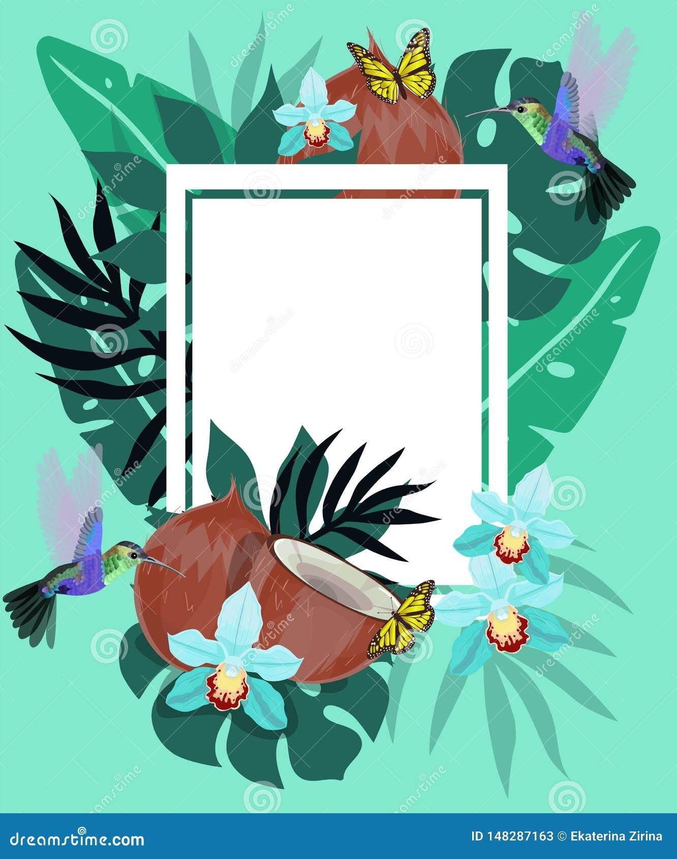 Lata tło z hummingbirds, koksem, motylami i błękitną orchideą, Kwiecista rama z małymi hummingbirds lata blisko