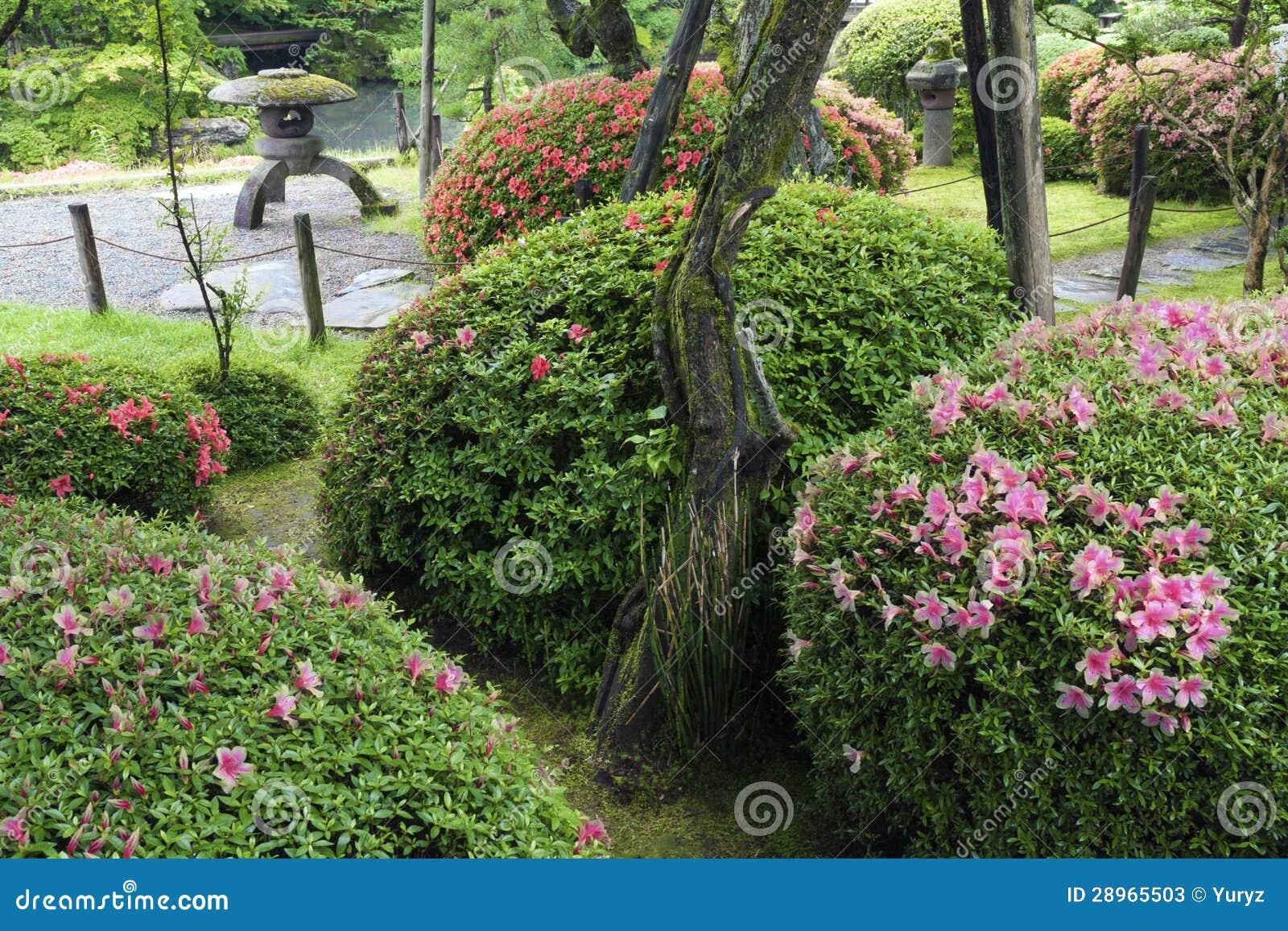 Lata Zen ogród