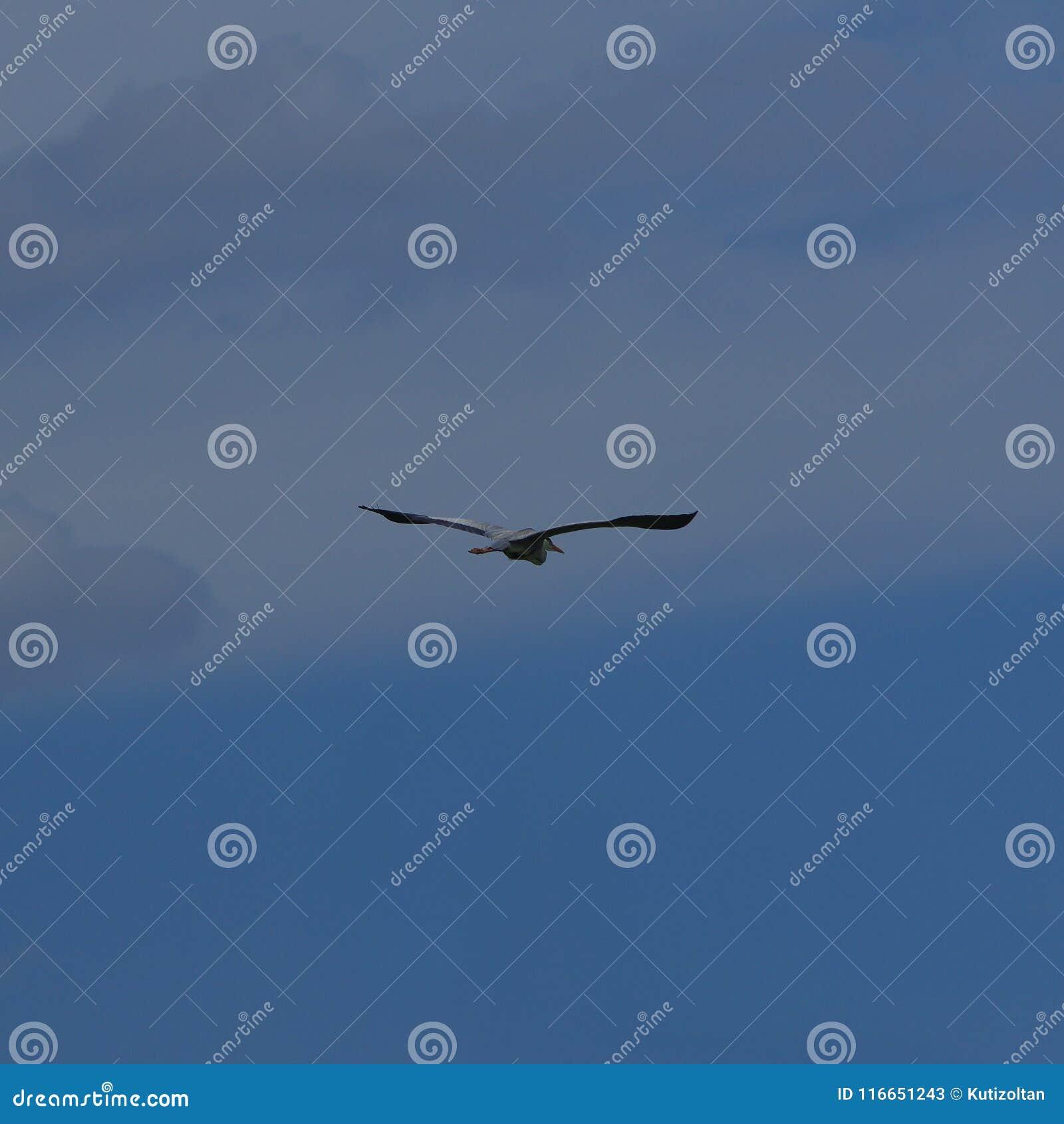 Latający siatki seagull nieba wektor