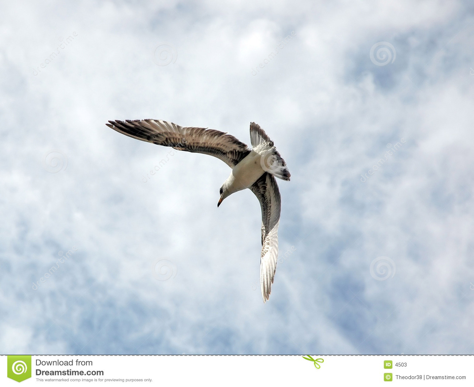 Latanie ptaka