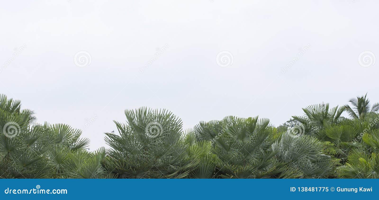 Latar-belakang tropis musim panas Yang-hijau dengan daun Dan-tanaman palem Yang-eksotis
