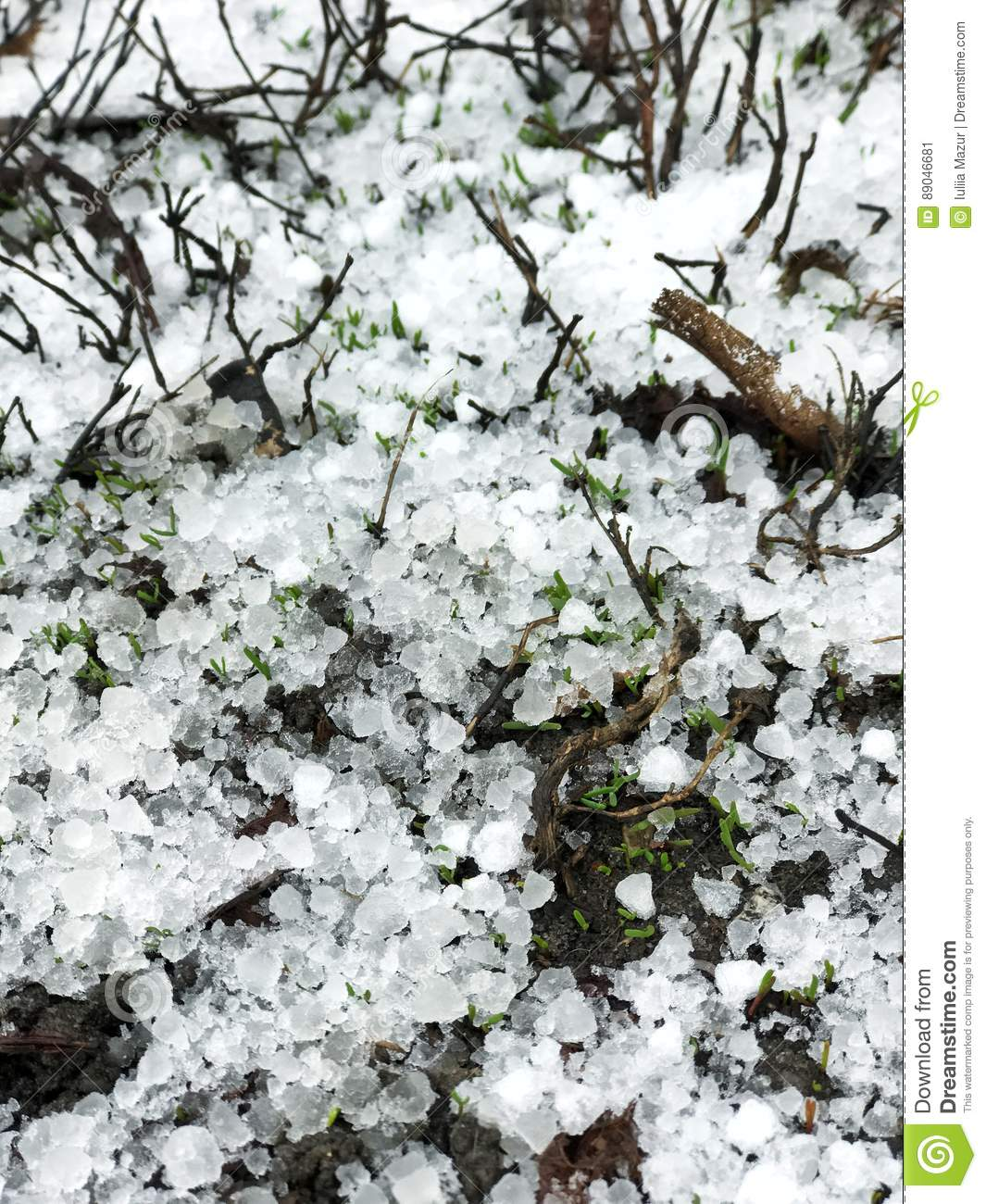 Late snow with hailstones on the ground