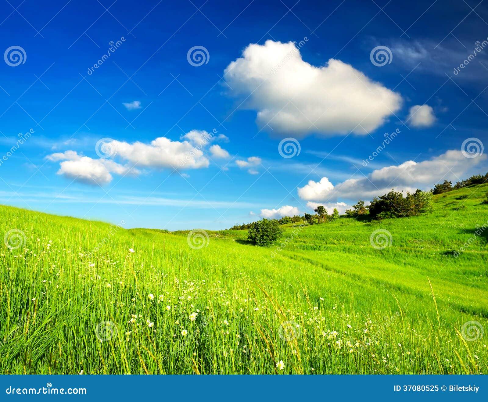 Download Lato krajobraz obraz stock. Obraz złożonej z roślina - 37080525