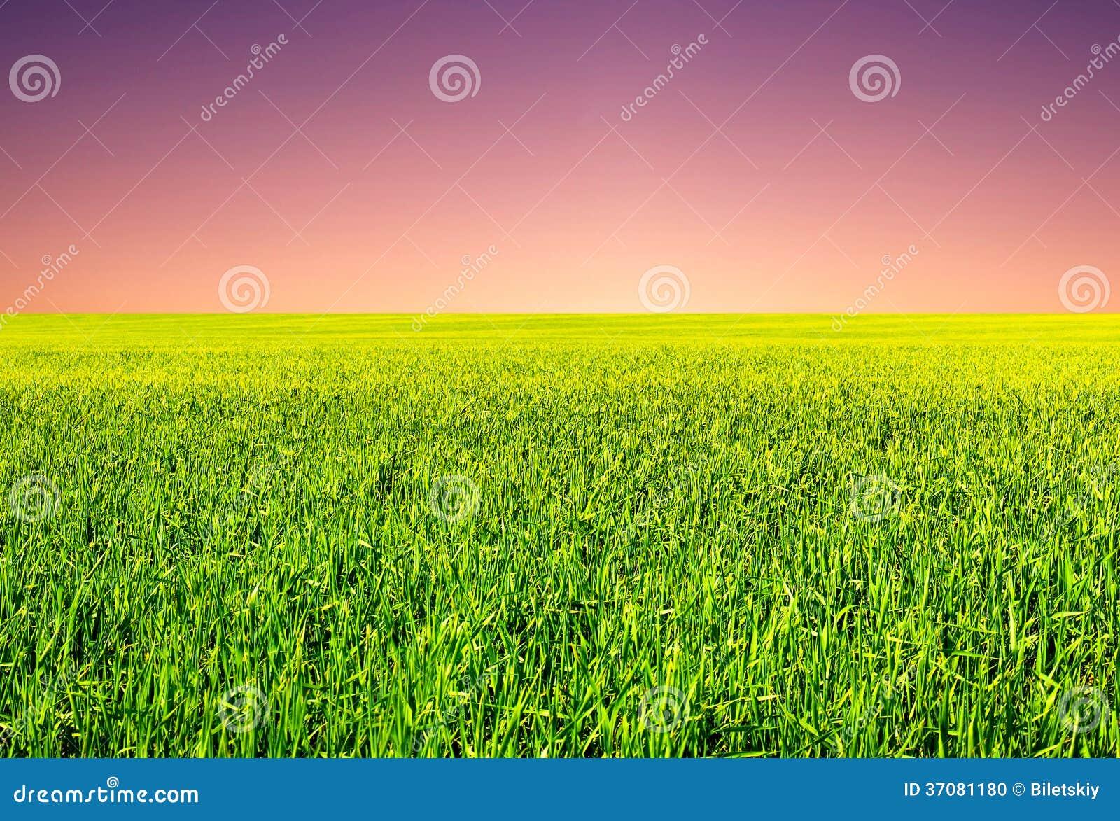 Download Lato krajobraz zdjęcie stock. Obraz złożonej z wzgórze - 37081180
