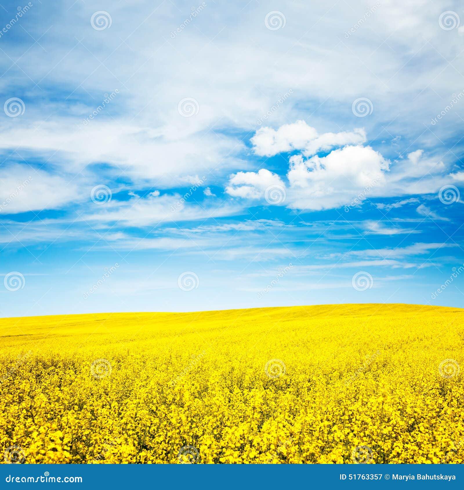 Lato krajobraz z gwałta niebieskim niebem i polem