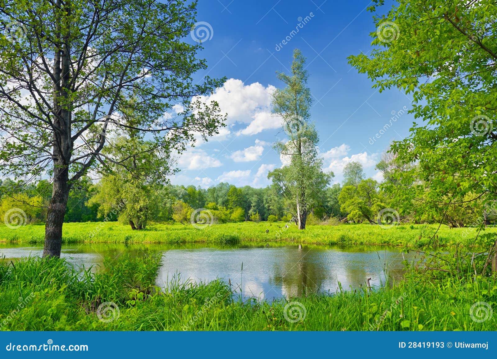 Lato krajobraz z osamotnionym drzewem i niebieskim niebem