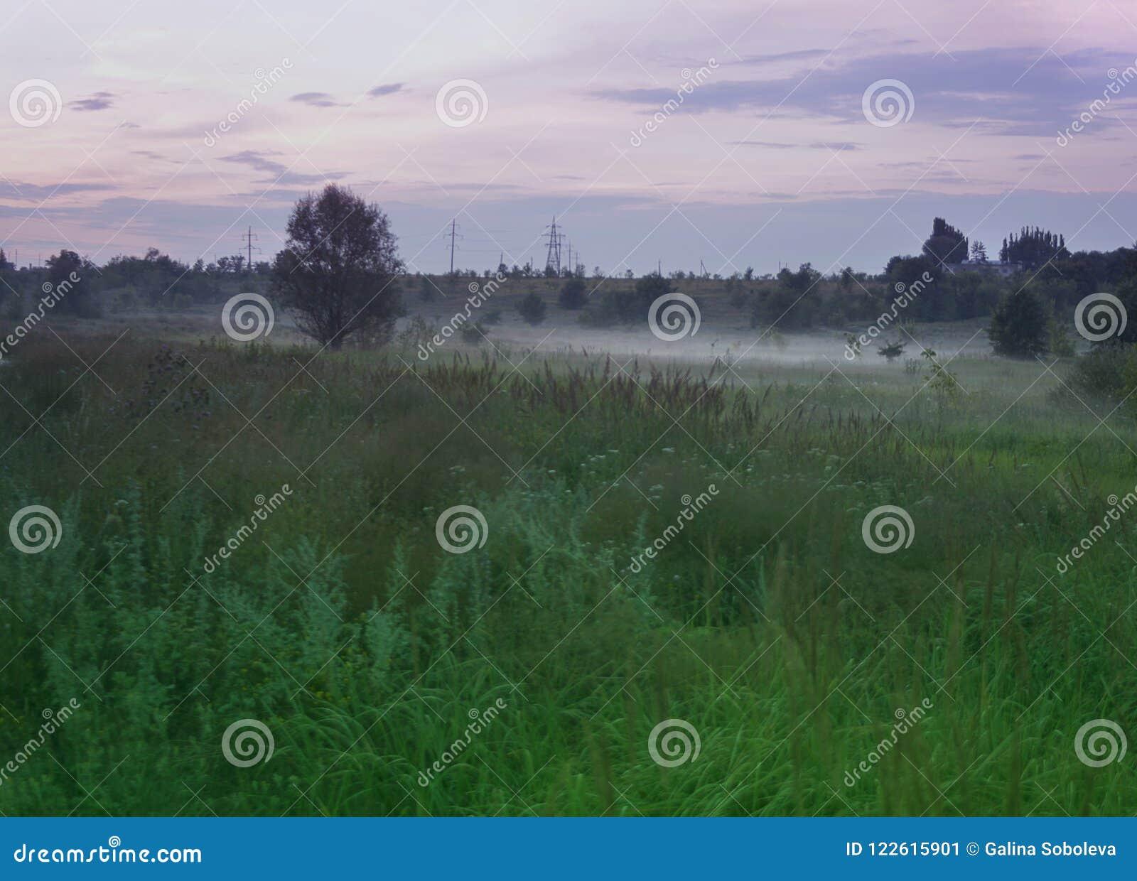 Lato krajobraz z wieczór mgłą nad zielonym gazonem