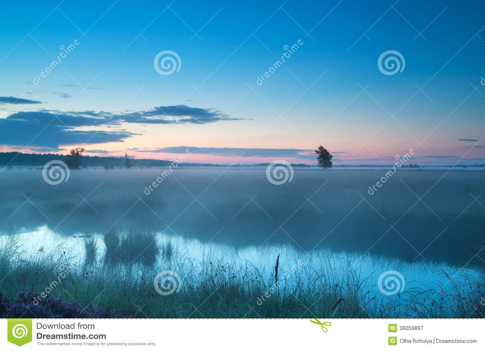 Lato mglisty ranek na bagnie