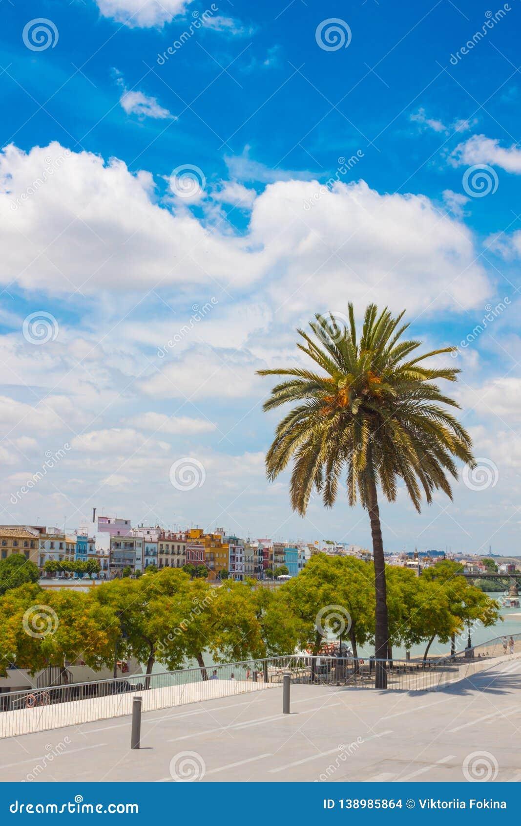 Lato park obok Guadalquivir rzeki, Seville, Hiszpania