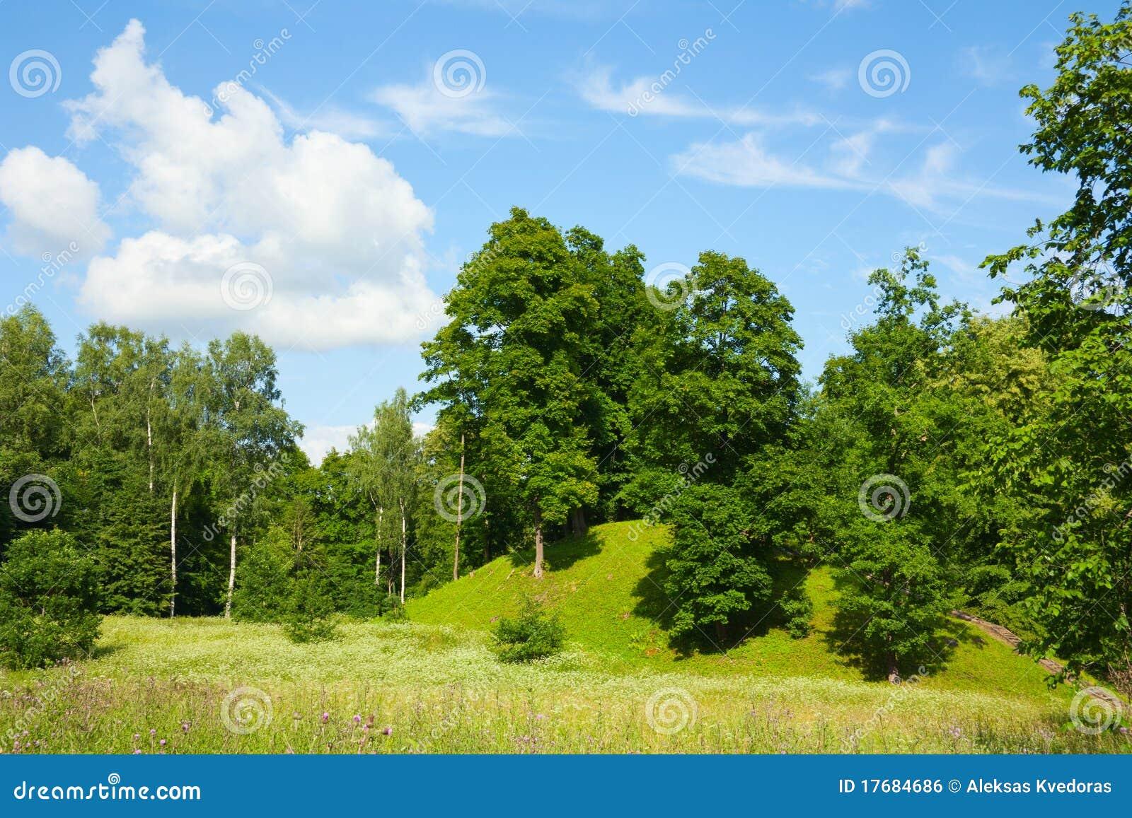 Lato parkowi drzewa