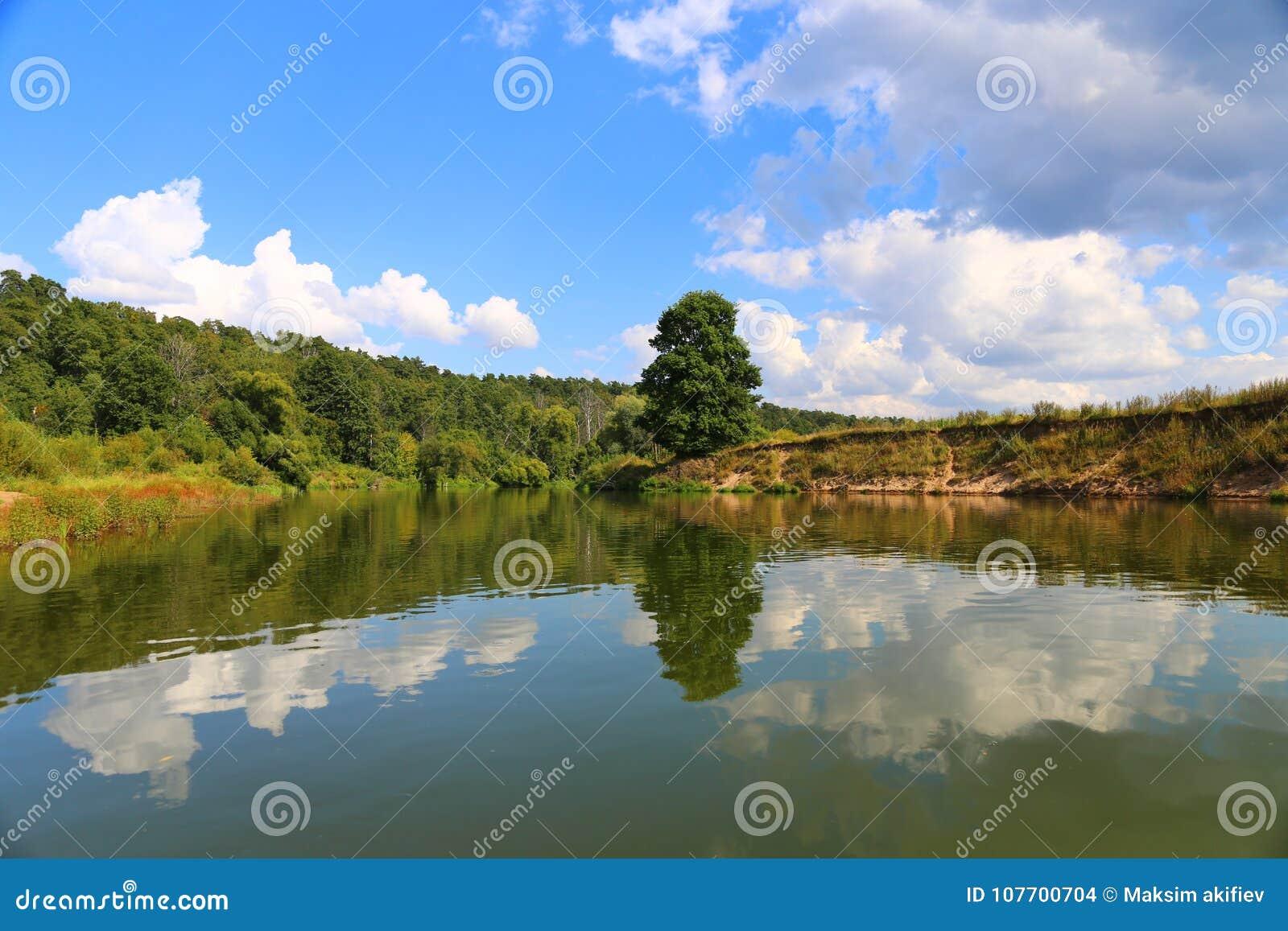 Lato piękny krajobraz Drzewo i niebieskie niebo odbijamy w wodzie