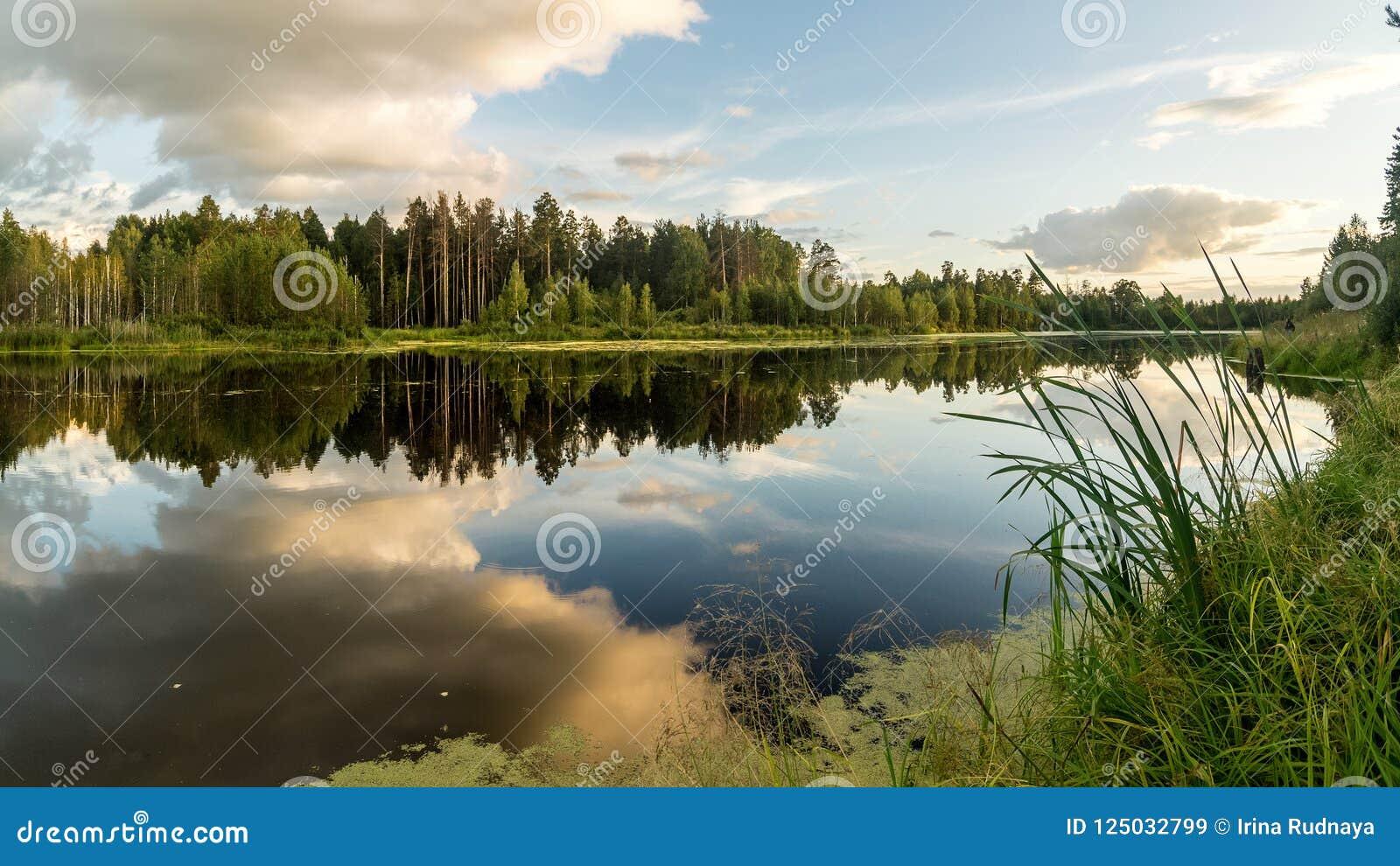 Lato wieczór krajobraz na Ural jeziorze z sosnami na brzeg, Rosja