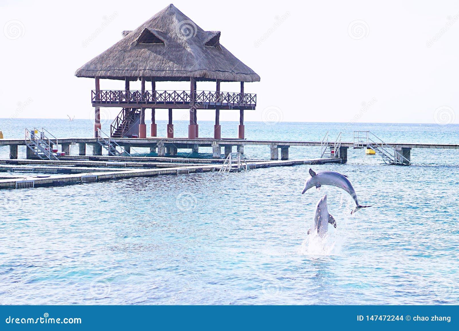 Lato z delfinem