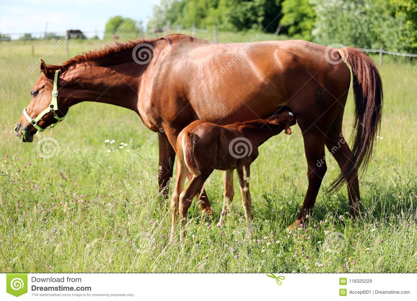 Puledra libera sul cavallo - 4 8