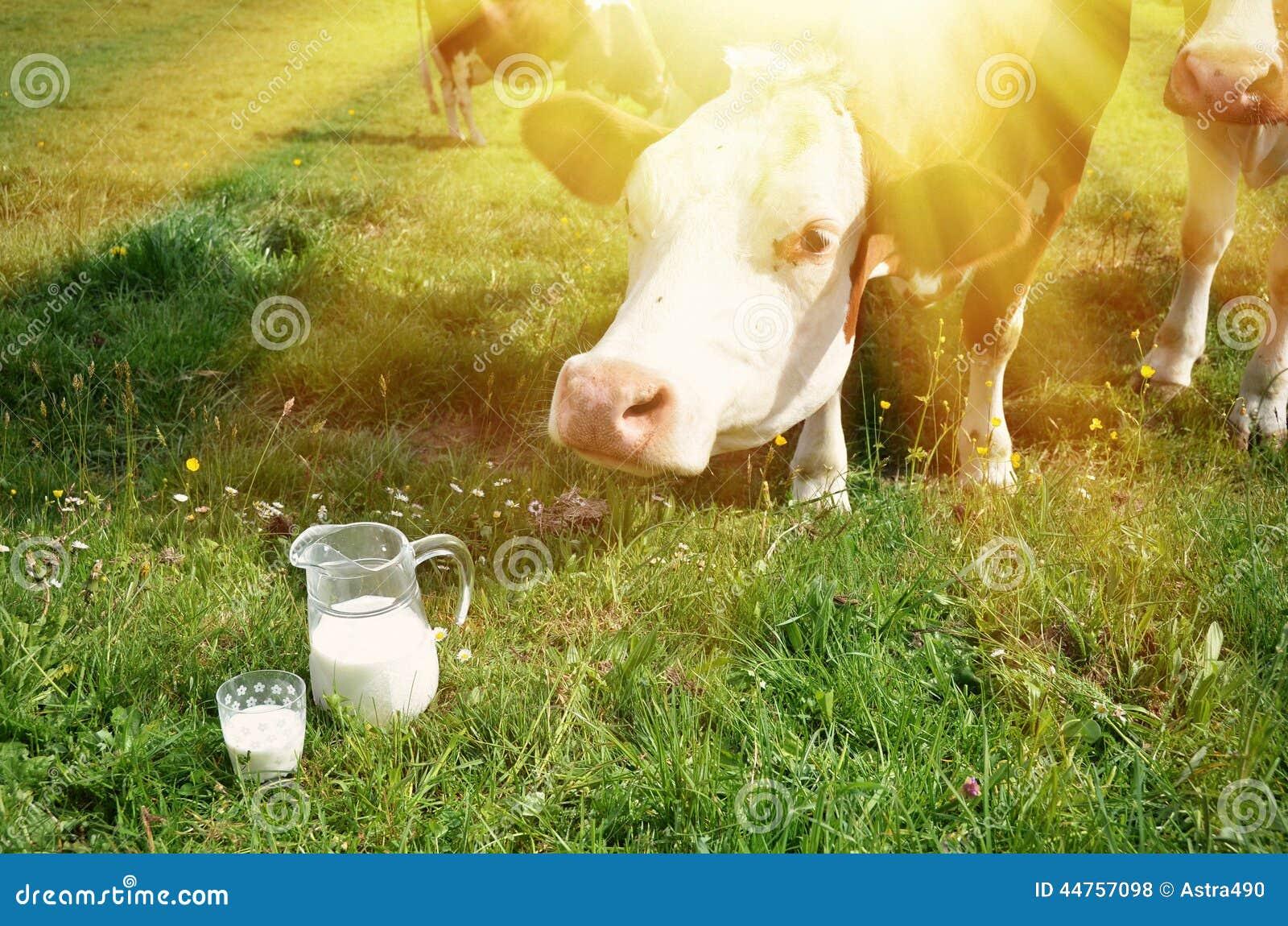 Latte e mucche