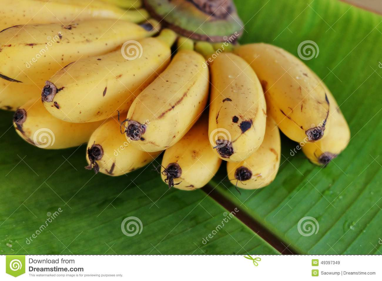 Apple Bananas Information, Recipes and Facts