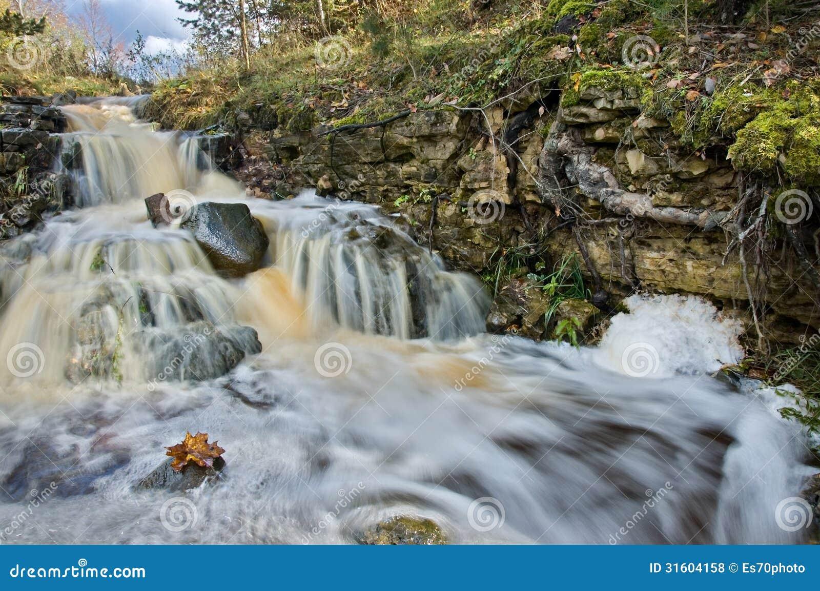 latvian autumn forest river - photo #31