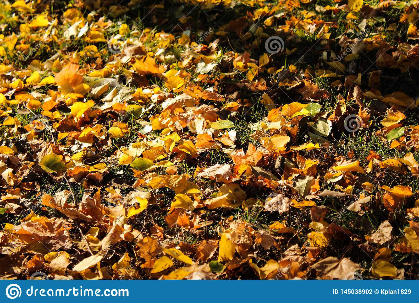 Laubfall auf der Höhe des Herbstes