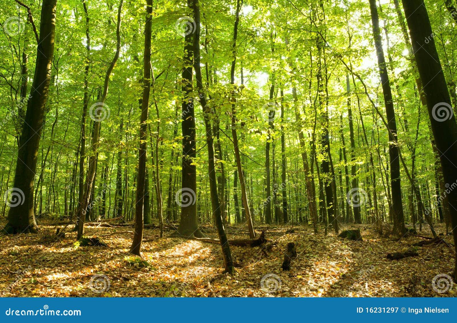 Laubwechselnder Wald