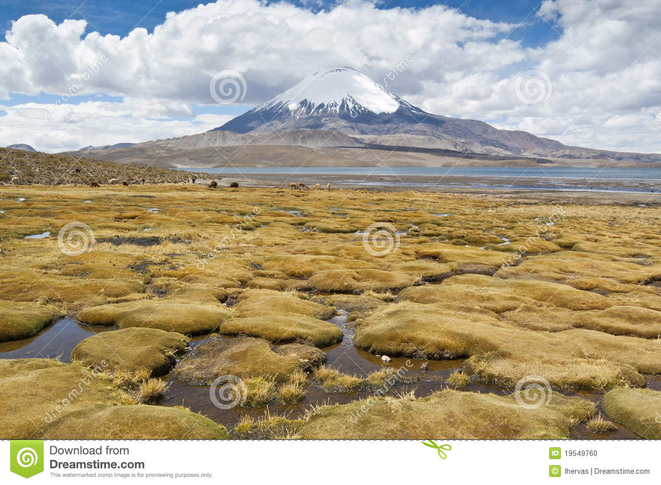 how to get to lauca national park