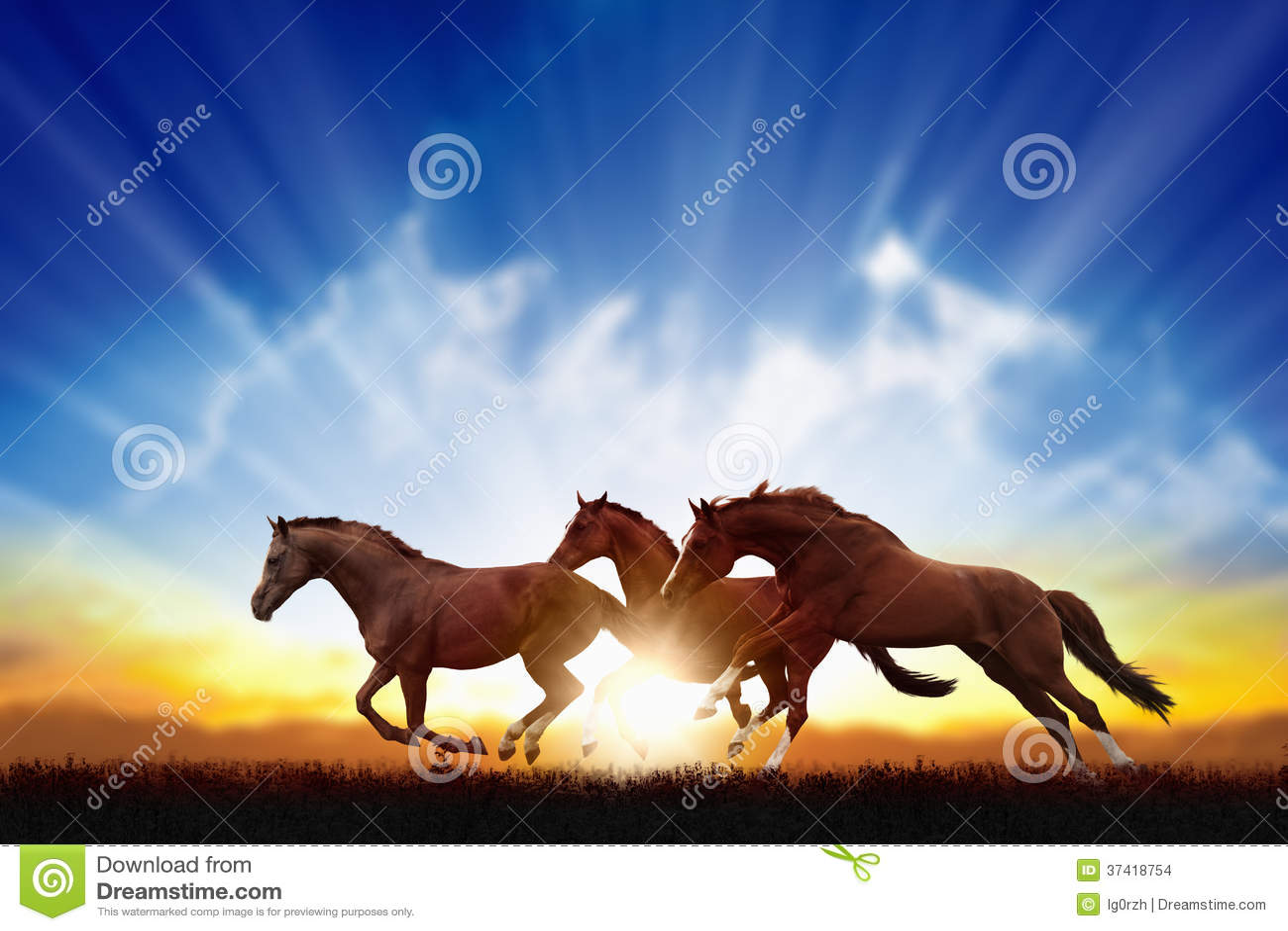 Laufende Pferde
