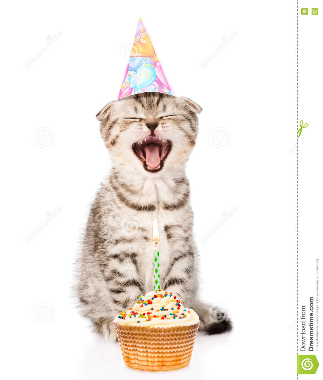 Pictures Of A Kitten With A Birthday Cake