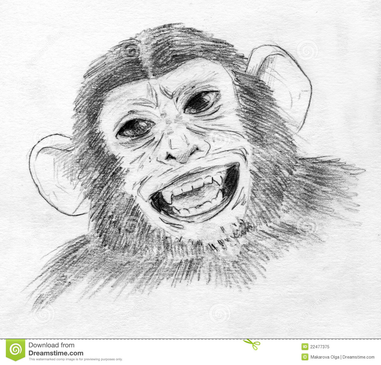 Laughing Chimp Royalty Free Stock Photo - Image: 22477375 - photo#24