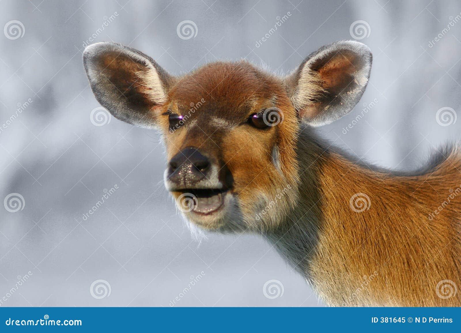 Laughing Deer Royalty Free Stock Photo - Image: 381645 - photo#30