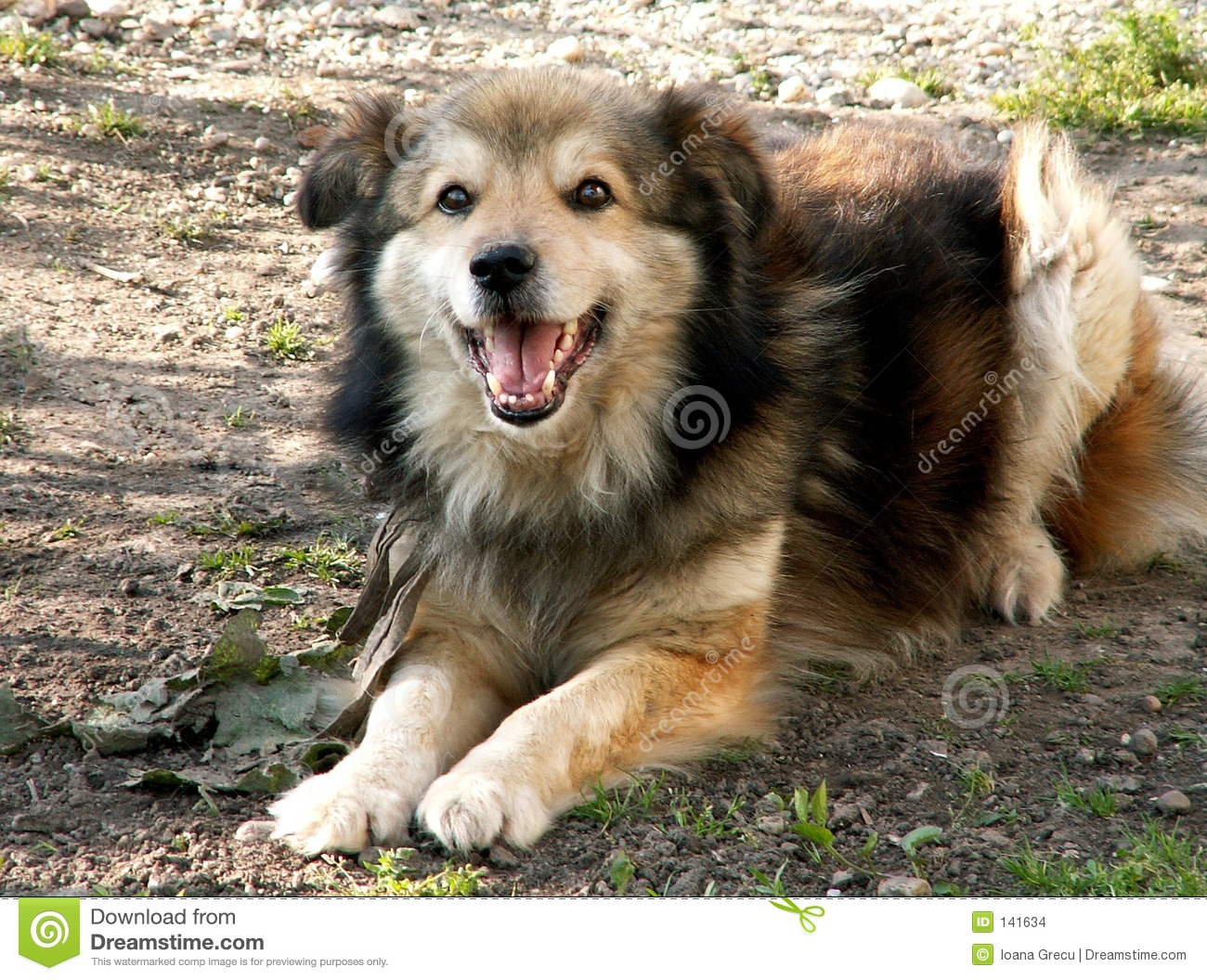 Laughing Dog Stock Images Image 141634
