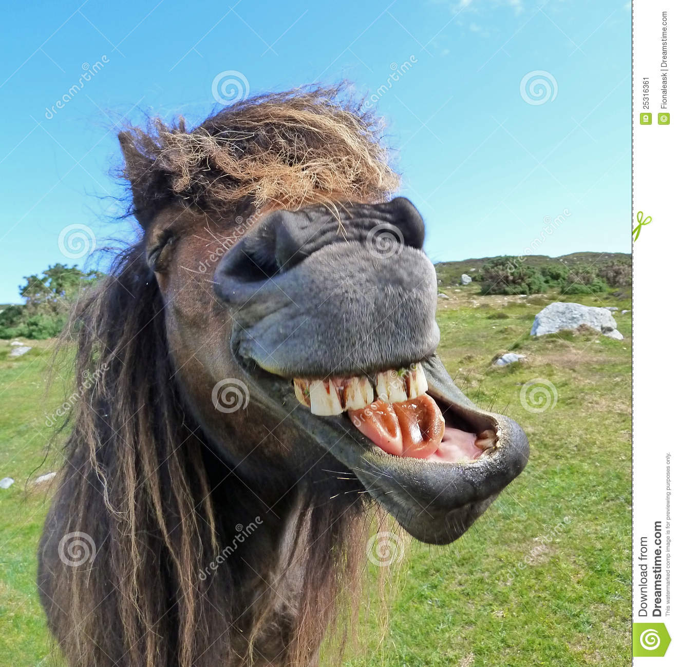 Laughing Horse Stock Image Image 25316361
